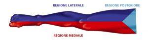 Regioni arto inferiore